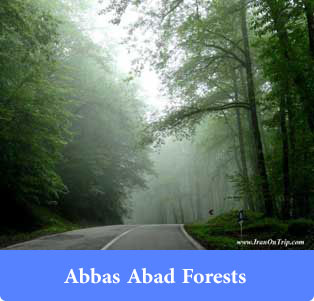 Abbas Abad Forests - Forests of Iran