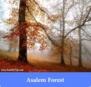 Asalem Forest - Forests of iran