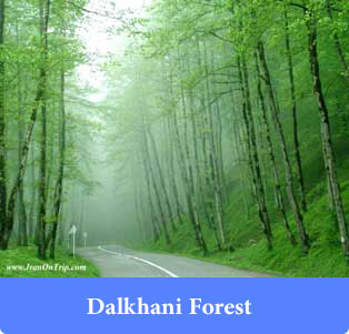 Dalikhani forest - Forests of Iran
