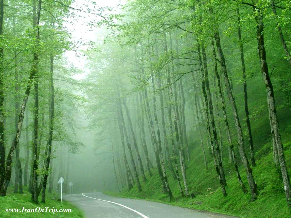Dalikhani Forests - Forests of Iran