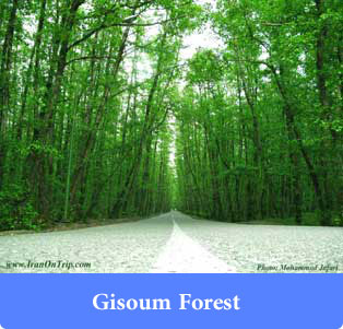 Gisoum Forest - Forests of Iran