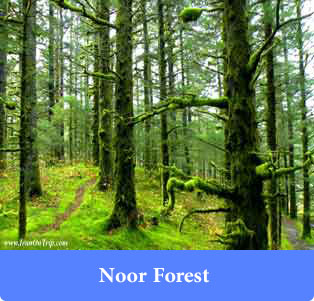 Noor Forest - Forests of Iran