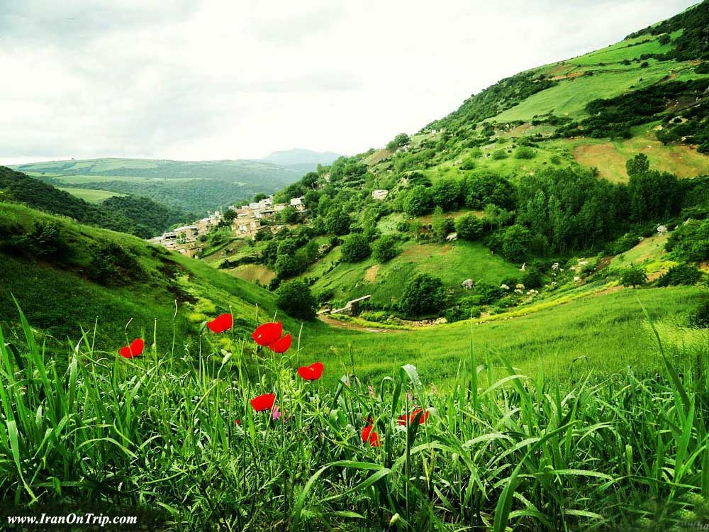 Padoldol plains of anemones in Golestan Village