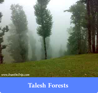 Talesh Forests - Forests of Iran