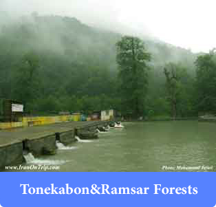 Tonekabon & Ramsar Forests - Forests of Iran