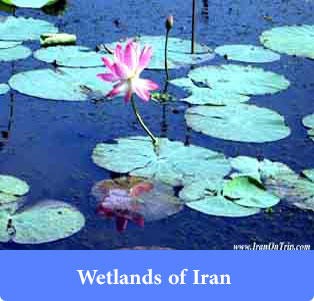 Wetlands of Iran - Trip to Iran