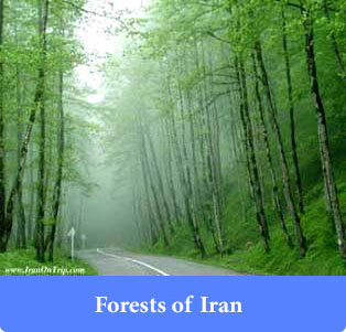 Forests of Iran - Trip to Iran